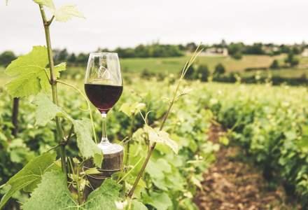 Vinul ecologic: cum se obține și cum se deosebește de cel convențional