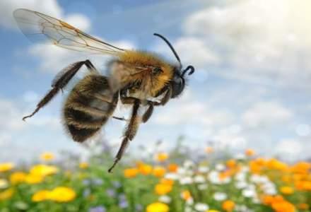 Albinele, ajutorul care face miracol in medicina din Romania