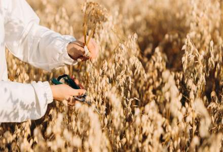 Ce trebuie să știi despre cultura de ovăz și utilizările acestei cereale