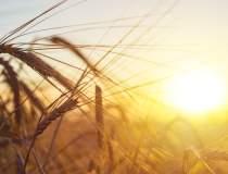Ministrul Agriculturii: 40%...