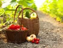 Agricultura ecologica,...