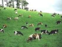 Subventiile din agricultura,...