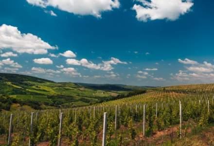 Producătorii din sectorul vitivinicol vor primi până pe 31 decembrie 2020 ajutorul de stat