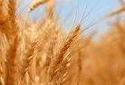 Producatorii agricoli: Seceta ar putea afecta pana la 80% din productia de cereale