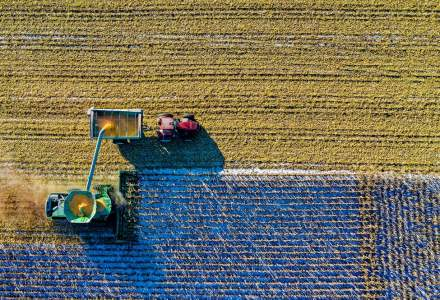 Idei de afaceri în agricultură: Care sunt cele mai profitabile culturi agricole din România
