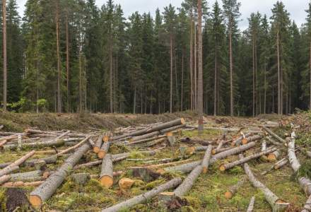 Un nou sistem de urmărire a lemnului tăiat. Cum funcționează