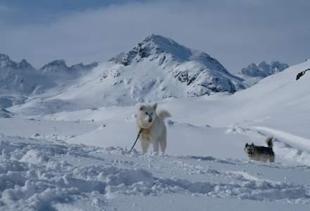 Doi turiști surprinși de o avalanşă, salvați de câinii lor care au lătrat după ajutor