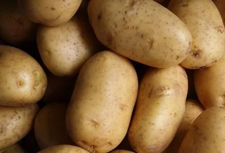 Cheltuim 64 mil. euro pentru cartofi ce ar putea fi produși în țară