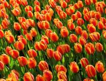 Sibiu: Donează o floare și...