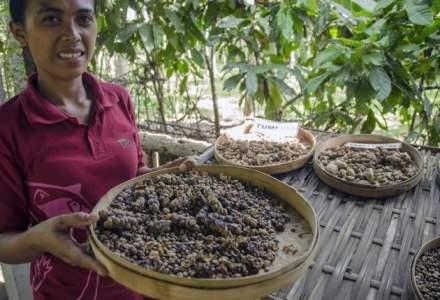 Cea mai scumpa cafea din lume este realizata din excremente de pisica si poate costa 500$