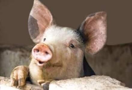 Elvetia a interzis importul de porci din mai multe tari, inclusiv Romania