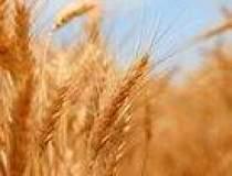 Agricultorii: Seceta si...
