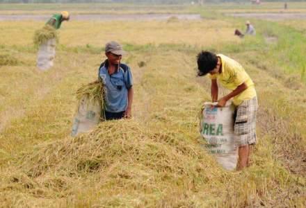 Bolivia este foarte aproape de a legaliza munca minorilor, incepand cu 10 ani
