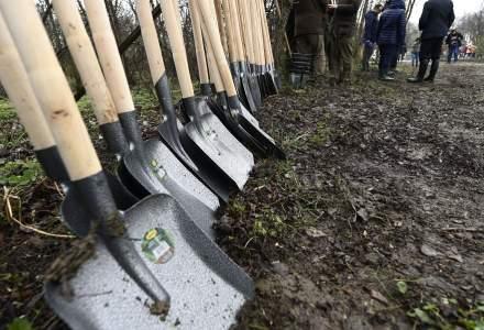 Primăria Sectorului 1 a anunțat că va planta 50.000 de arbori