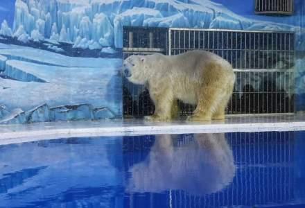 """[FOTO] """"Hotelul de urși polari"""" din China care a atras controverse"""