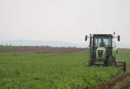 Valoarea productiei agricole a crescut cu 24,5% anul trecut, la 78,4 mld. lei
