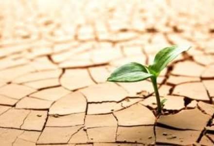Seceta pedologica pe mai multe suprafete agricole: Dobrogea, cea mai afectata