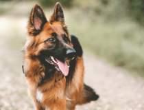 Câinii polițiști | Povestea...