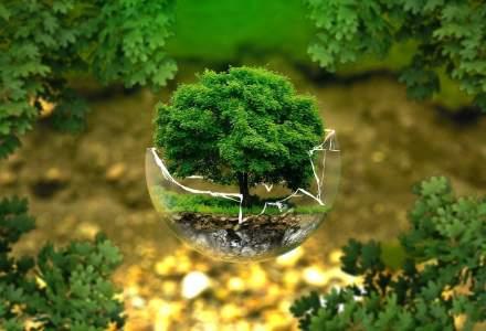 ABC-ul reciclării: sfaturi pentru un stil de viață prietenos cu mediul