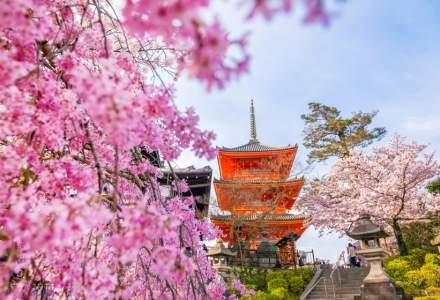 Cireșii din Japonia au înflorit mult mai devreme, semn îngrijorător al încălzirii globale