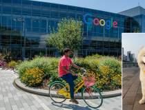 Google își recheamă angajații...