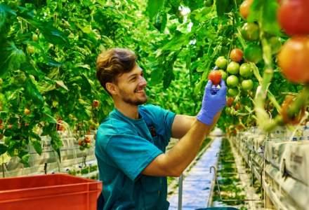 Afaceri agricultură: OPT afaceri pe care le poți începe cu 10.000 euro