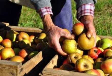 Moldova livreaza mere in magazinele marilor retaileri din Romania