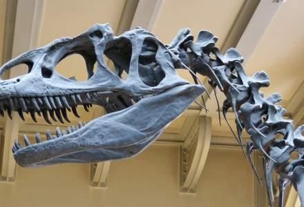 Rămășițele unui dinozaur erbivor, descoperite în cel mai arid deșert din lume