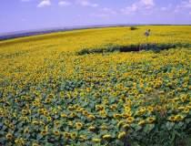 (P) Agricultura smart pentru...