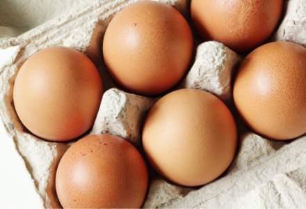 Peste 260.000 de ouă contaminate cu Salmonella, descoperite de ANSVA