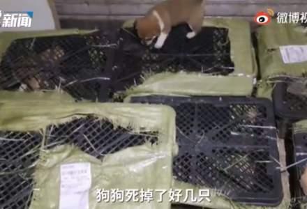 Un nou trend bizar a prins popularitate în China - cutiile misterioase cu animale, care au stârnit furia publicului