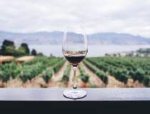 Un producător românesc de vin...