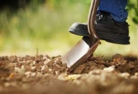 Biletul de intrare in agricultura: ce afaceri poti cumpara la pretul unei garsoniere