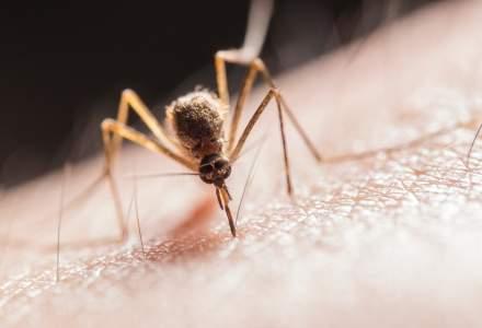Cum plănuiește Primăria Capitalei să rezolve problema căpușelor și țânțarilor