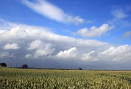 Daniel Constantin: Romania, pe primul loc in UE la suprafata cultivata cu porumb