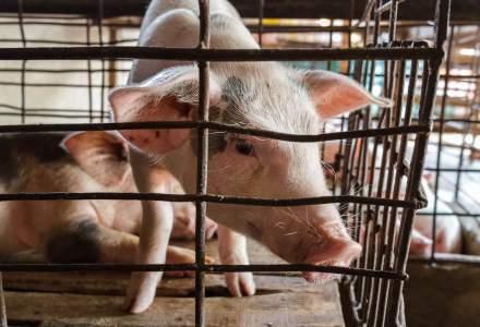 Parlamentul European cere suprimarea progresivă a creşterii de animale în cuşti