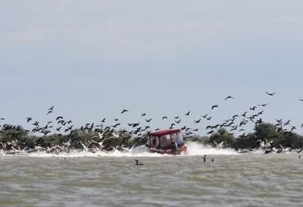 Stol de pelicani, lovit în plin de o barcă. Administrația Deltei a avut o reacție minimă inițial