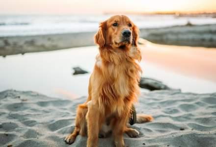 Câinii și nasul lor fin. Cum își poate da seama câinele tău dacă nu ești o persoană de încredere