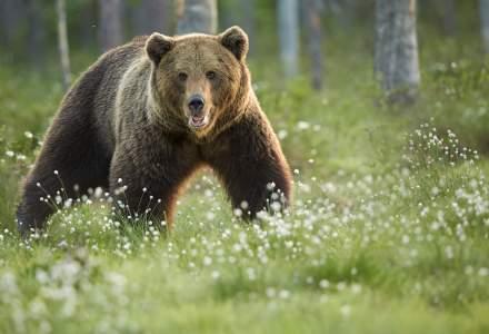Sfaturile Salvamont privind urșii, furtunile și pregătirea pentru traseul alpin