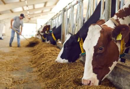 APIA plătește 23 de milioane de lei ajutoare de stat pentru creșterea animalelor