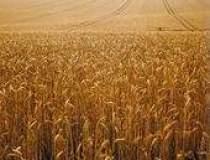 Agricultura romaneasca nu s-a...