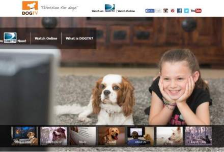 Dog TV, televiziunea dedicata cainilor, se extinde in Europa