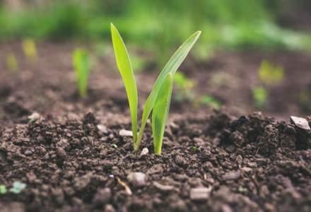 Substanțe permise în agricultura ecologică: care sunt pașii pentru a te certifica BIO