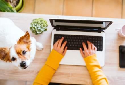 De la birou, la spațiul virtual de lucru. Cum se poate crea un birou virtual în care nici câinii nu se aud lătrând