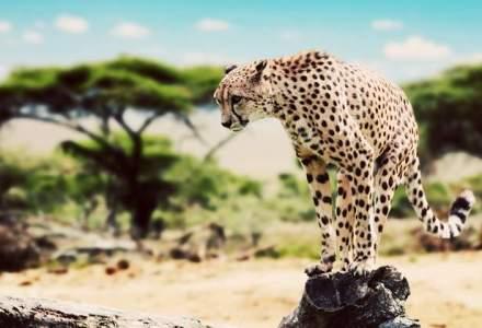 Evadare in tara in care vedeti animalele de la National Geographic