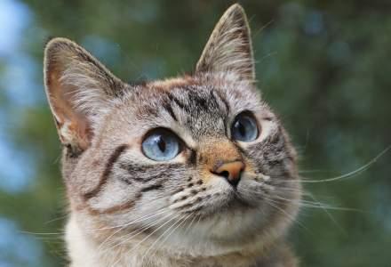 Pisica erou: felina a alertat vecinii că stăpânul său nu se simte bine