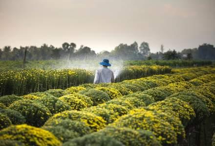 România, la coada clasamentului: Avem cele mai multe ferme din Europa, dar realizăm doar 3% din producție