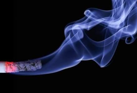 Contrabanda cu tigari: peste jumatate de milion de pachete descoperite in Portul Constanta