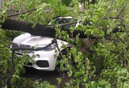 Sector 5: Proprietarii de autovehicule avariate de copaci căzuţi pe domeniul public vor fi despăgubiţi