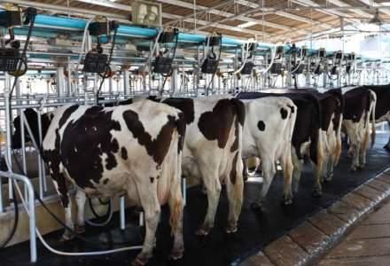 Importul a inchis 50 de fabrici de lapte in Romania in 2014